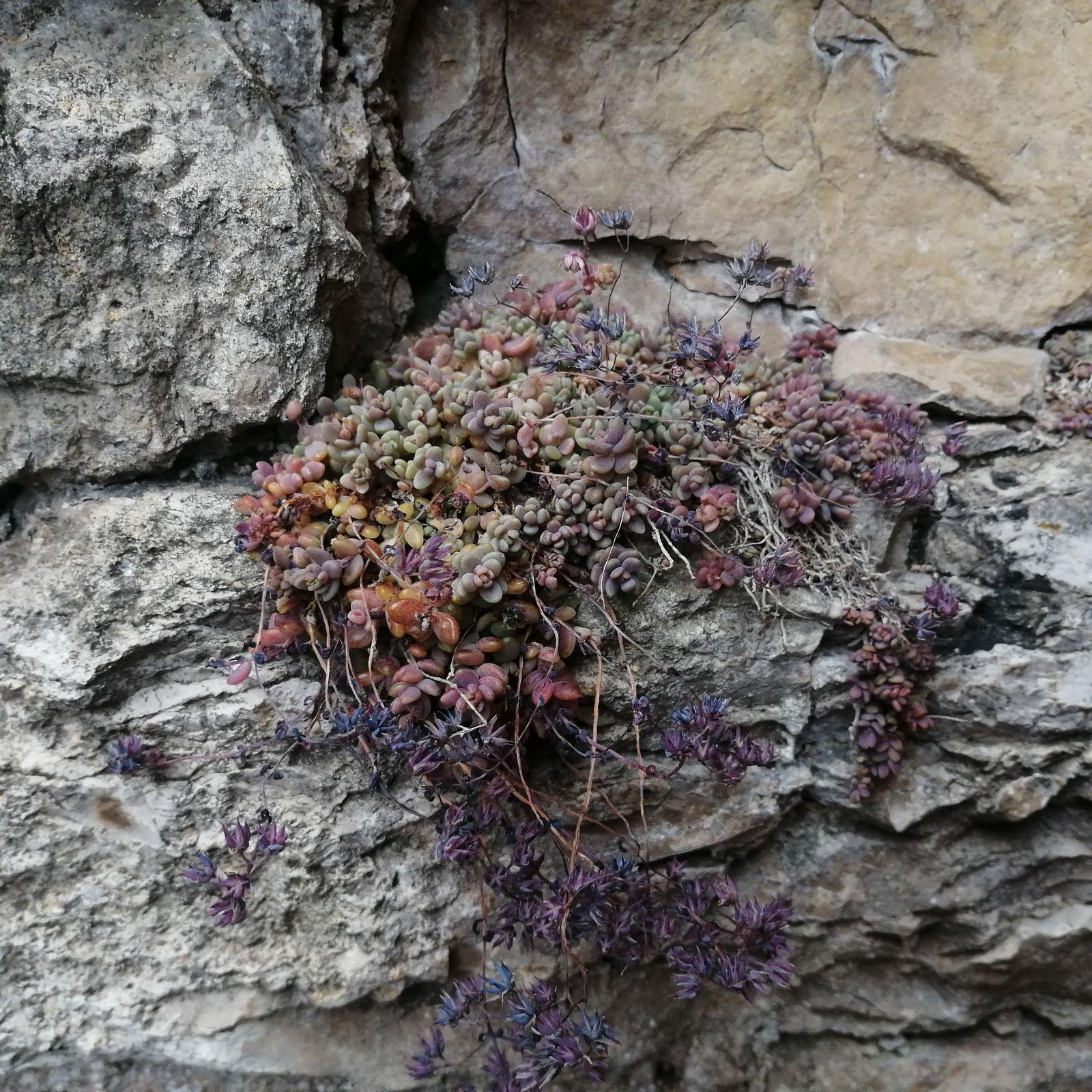 la végétation pousse entre les pierres