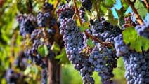 #Pinot Noir Producers New York Vineyards page 5
