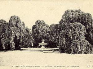 Le cèdre et les sophoras du parc du Château de Fromont à Ris-Orangis