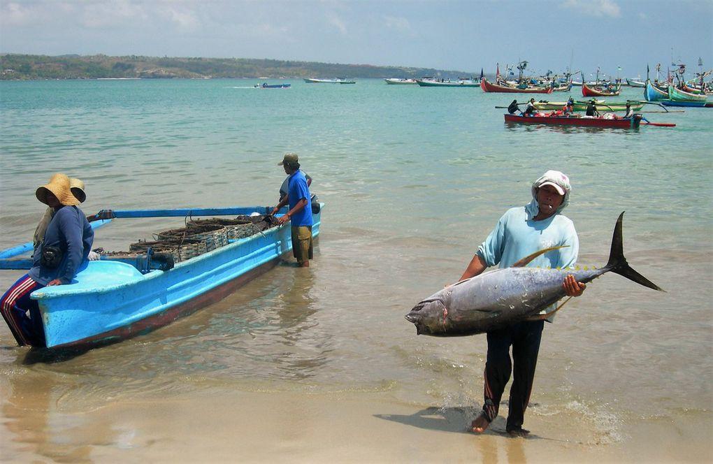 Si vous allez à Bali, on vous dira que Jimbaran c'est juste intéressant pour dîner aux chandelles sur la plage, on ajoutera qu'il y a trop d'hôtels cinq étoiles, trop de tourisme chic, trop près de l'aéroport etc. Et pourtant au nord de la plage de 4 km, le marché aux poissons de Jimbaran reste l'un des lieux les plus balinais de tout Bali ! On y fait peser des poissons en tout genre, ou des crevettes, calamars, au choix et au poids; puis on les fait griller en face du marché. Idyllique, n'est-ce pas ? Au sud de la plage ( 4ème dia avant la fin ), on trouve aussi  de jolis cafés sur le sable. C'est tout de même là, au milieu, que le 1er octobre 2005 deux djihadistes, équipés de sacs à dos remplis de clous et de billes métalliques, se sont fait exploser à une minute d'intervalle, vers 19 h 45, dans le café Menega et le Fast Court. Bilan: des dizaines de blessés et près de vingt morts, la plupart indonésiens. Inutile de chercher une plaque commémorative, ou une quelconque pancarte rappelant le drame ... il n'y en a pas; Bali accueille chaque année plus d'un million de touristes du monde entier...