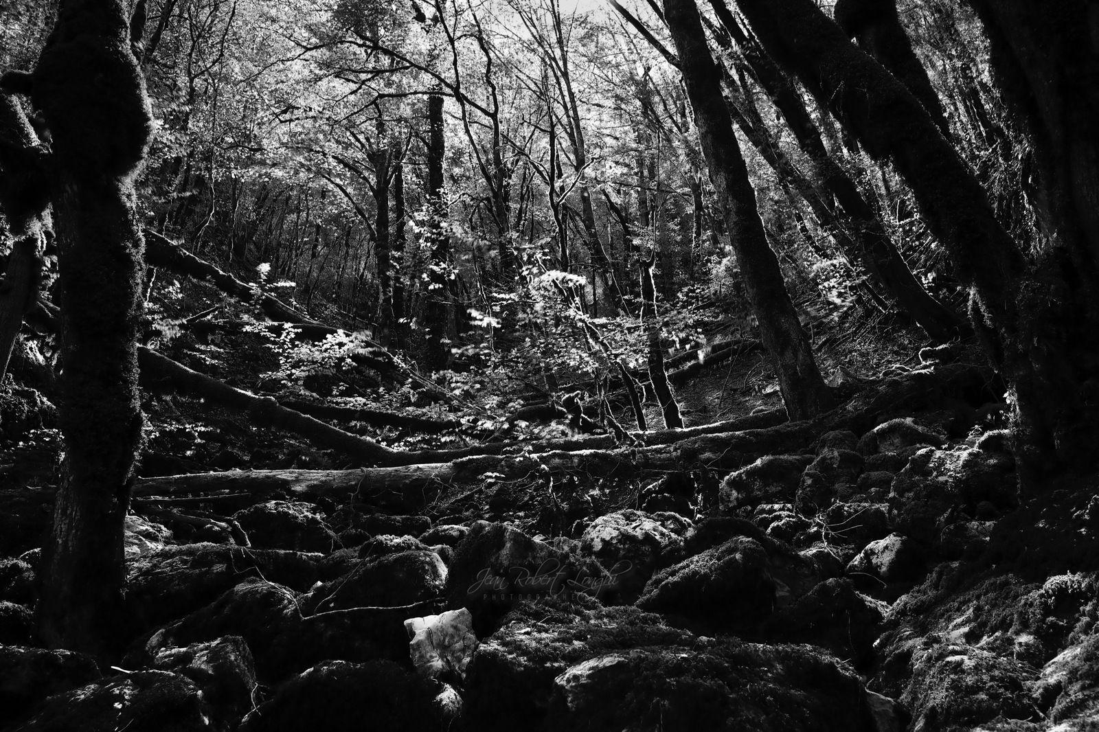 Doubs - Lumière de printemps - 26 - La Loue - ©2021 Jean-Robert Longhi Photographie non libre de droits.