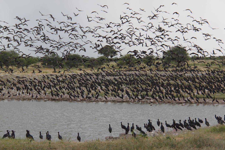 3 mois en Namibie en camping-car : infos pratiques et bilan