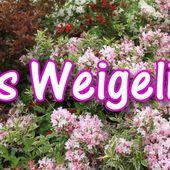 d2. Les weigelias - plaisir-jardin.com