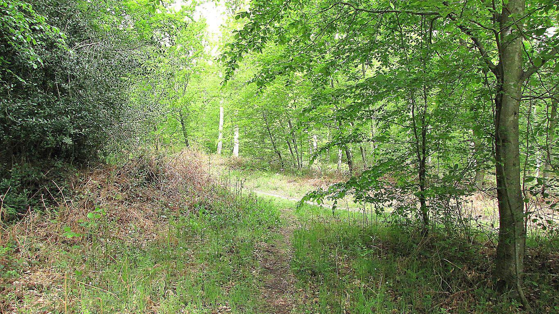carrefour_Route du Petit Octogone_Sentier (parcelle 149)