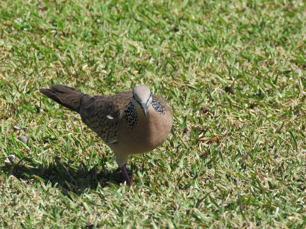 Saga-Néo-Calédonienne..... 3ème et 4ème jours : suite de visite du Grand Sud et de Nouméa.