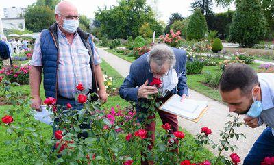 Les roses primées en 2020 Orléans
