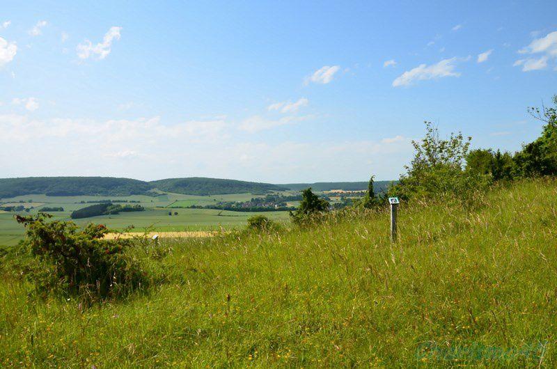 La colline des orchidées près d'Arbourse (Nièvre)