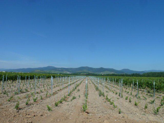 dossards, départ marche, les vignes, ravitaillement, coureurs, arrivée, détente, message...