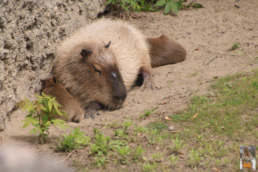 Besuch Zoo Berlin 29.05.2021