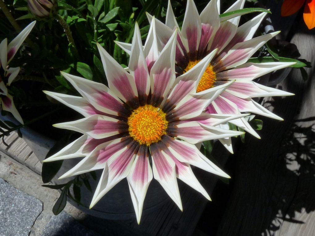 Fleurs 149