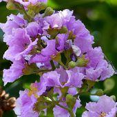 Fleurs du jour (20-26) - Fleurs d'Isaan (1) - Noy et Gilbert en Thaïlande