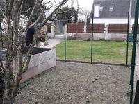 Travaux du jardin 2019, le potager prend des allures de forteresse...