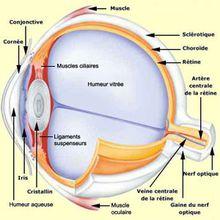 Atlas/voyage en ophtalmologie : le cristallin et la cataracte