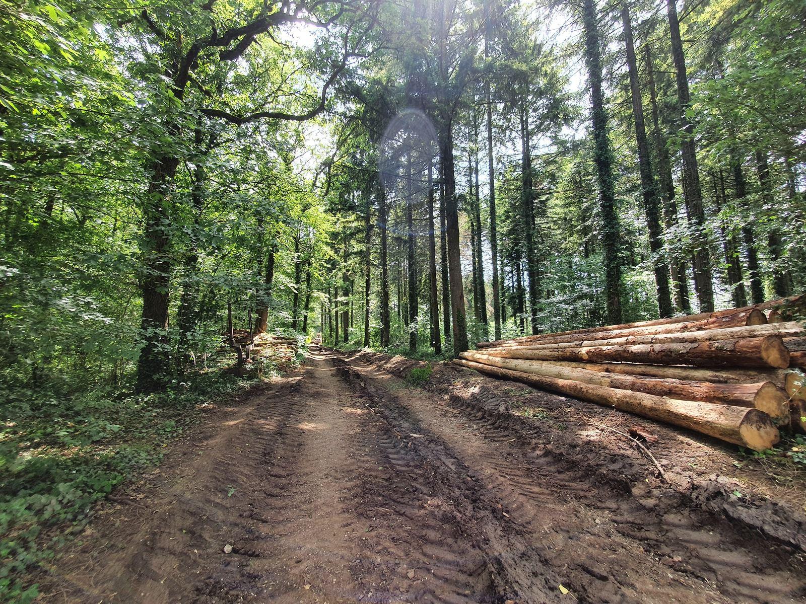 Le Bois du Pimeux, à Couvignon