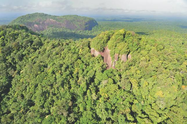 Forêt tropicale protégée de la réserve naturelle nationale de La Trinité, en Guyane