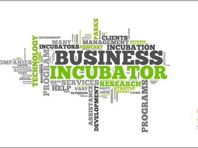 What do startups look for in an incubator?