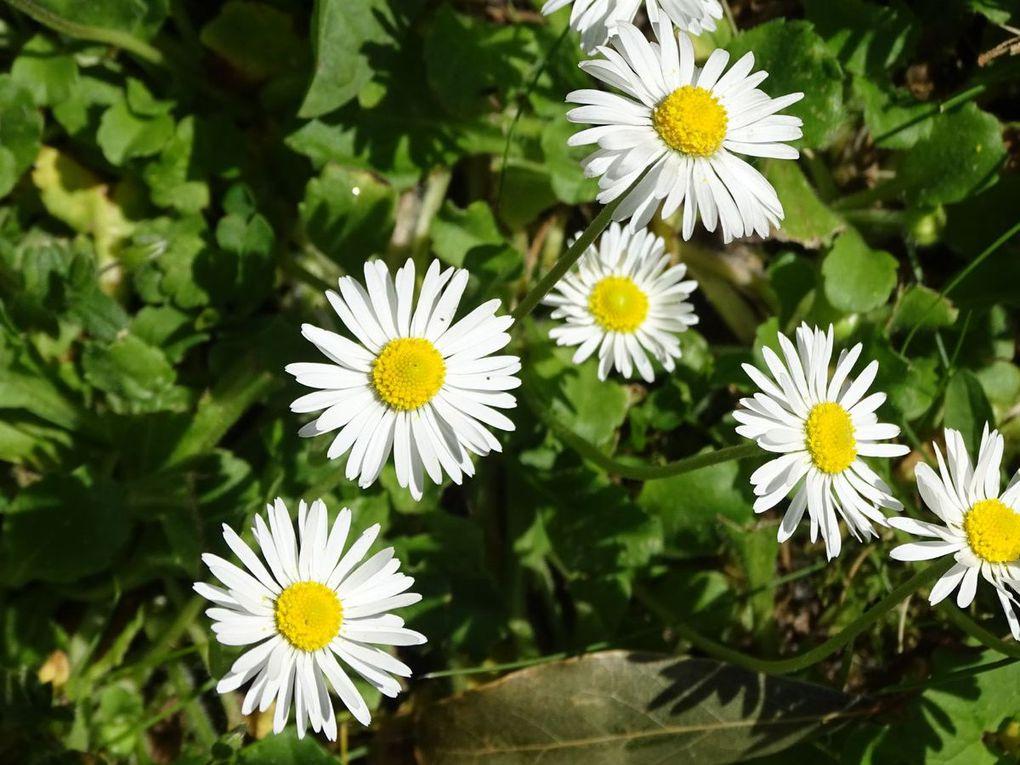 Encore des fleurs de mon jardin