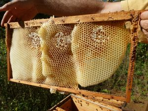 Un rayon de miel