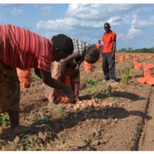 OGM: «Laissez les agriculteurs décider!»