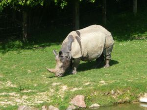 Rhinocéros et guépard