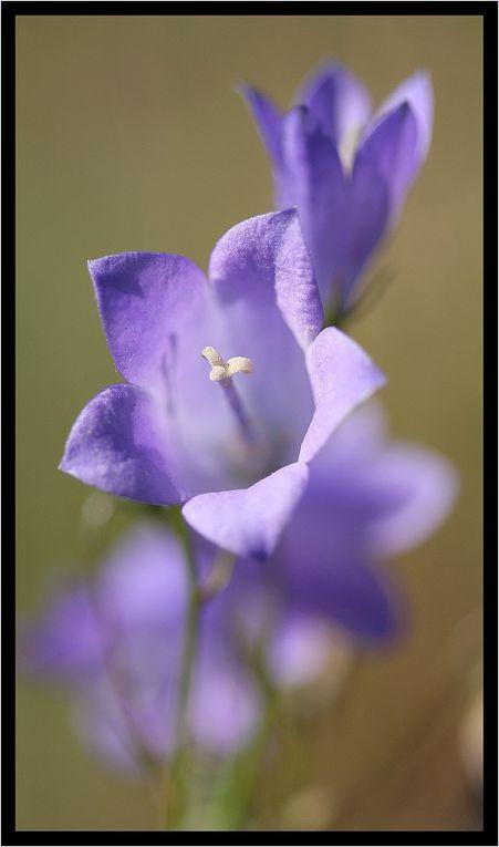 """Z'Album"" : fleurs-2"