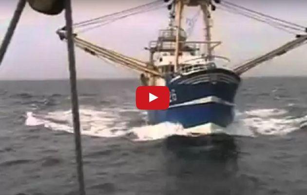 Vidéo - un chalutier percute un vieux gréement en haute mer