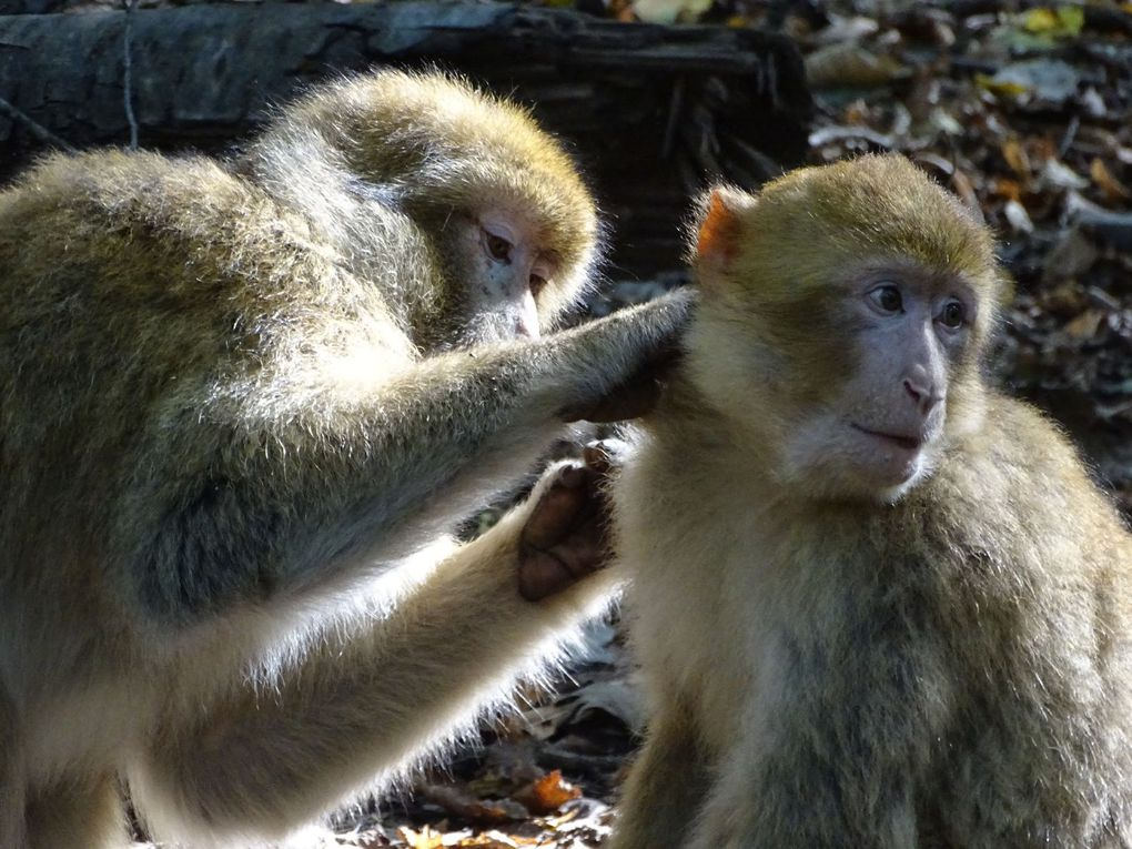 "Visite de ""Terre de singes"""