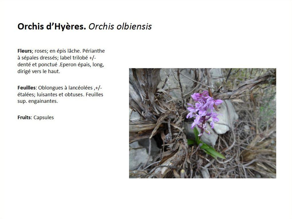 Les fleurs de nos randonnées 2014