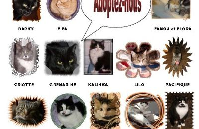 Chats à adopter !
