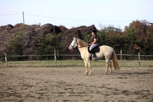 Epreuves de l'après-midi partie 01 concours de dressage au poney club de léguevin le 11 déc 2011
