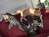 4 chatons au pied des poubelles NOLIVIER STE ROSE - TOUS ADOPTES