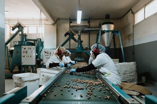 Leading Of The Argan Oil Producer In Morocco