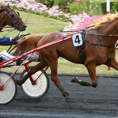 Quinté lundi à Enghien : All-in sur Bellagio Monoï !