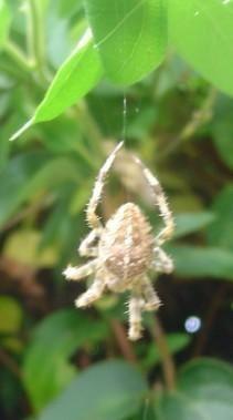 <p>tout ce qui parle de nature, ne notre jardin ... et de nos fauves ....</p> <p>Sans oublier les petits zoziaux ;-)</p>