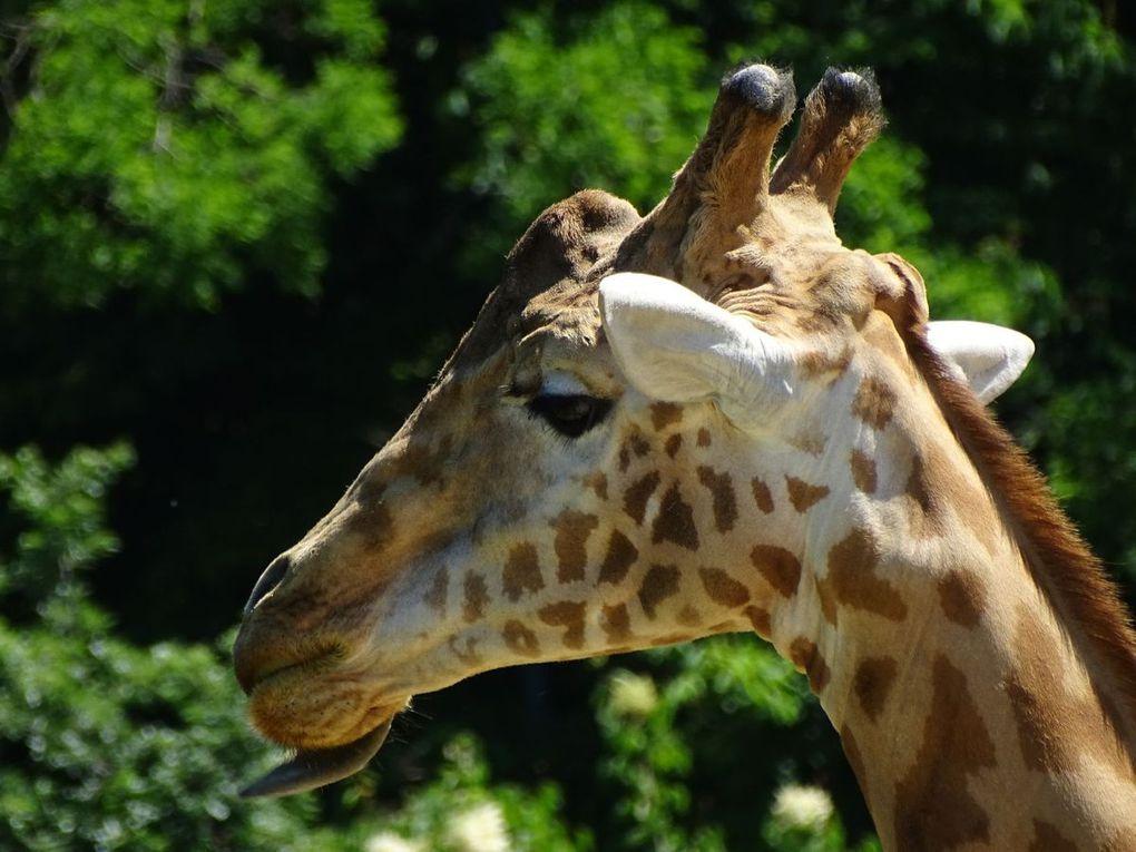 Le Zoo de Vincennes...(ou de Paris)