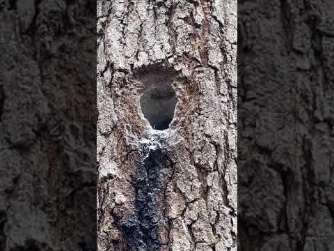 Podensac destruction rapide de vos nids de frelons par l'ADSA33
