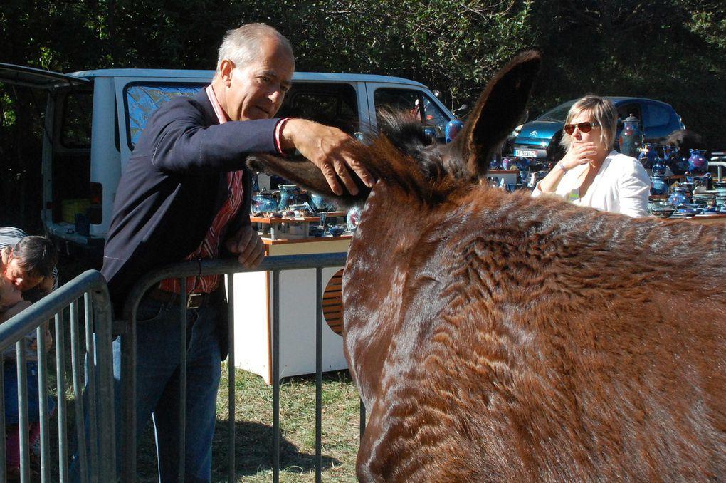 Les 5 premières photos, fête de l'âne catalan 2012.