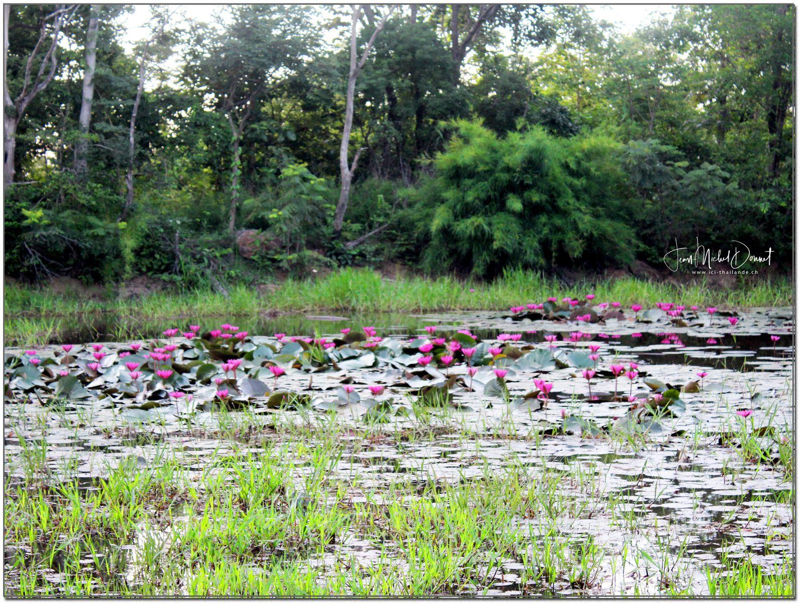 La végétation de notre région d'Issan (Thaïlande)