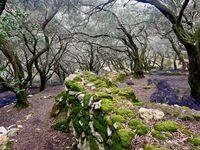 Une poésie que ces vieux troncs plein de malices qui vous font voyager dans les méandres de leurs branches.....