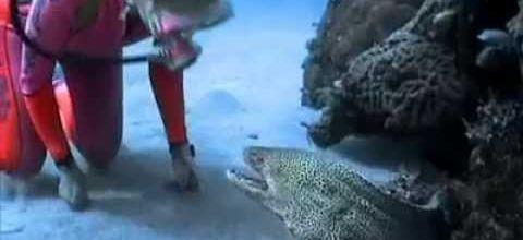 La plongeuse et la murène