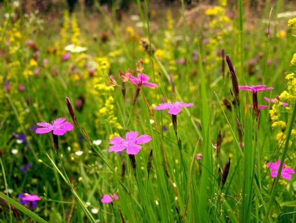 Album - flore / flowers