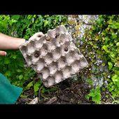 Lutter et détruire gratuitement les limaces et escargot :astuce de la régulation et de l'observation