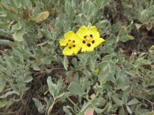 Une flore toujours aussi belle et variée et un environnement encore préservé,c'est un beau cadeau.