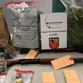 Hérault : une petite plantation de cannabis découverte à Valergues