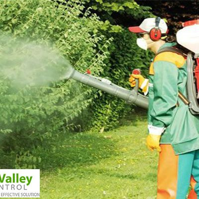 Effective methods of pest control that you should know