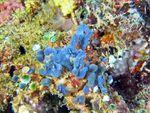Voyage-plongée: Lutin bleu, devinette