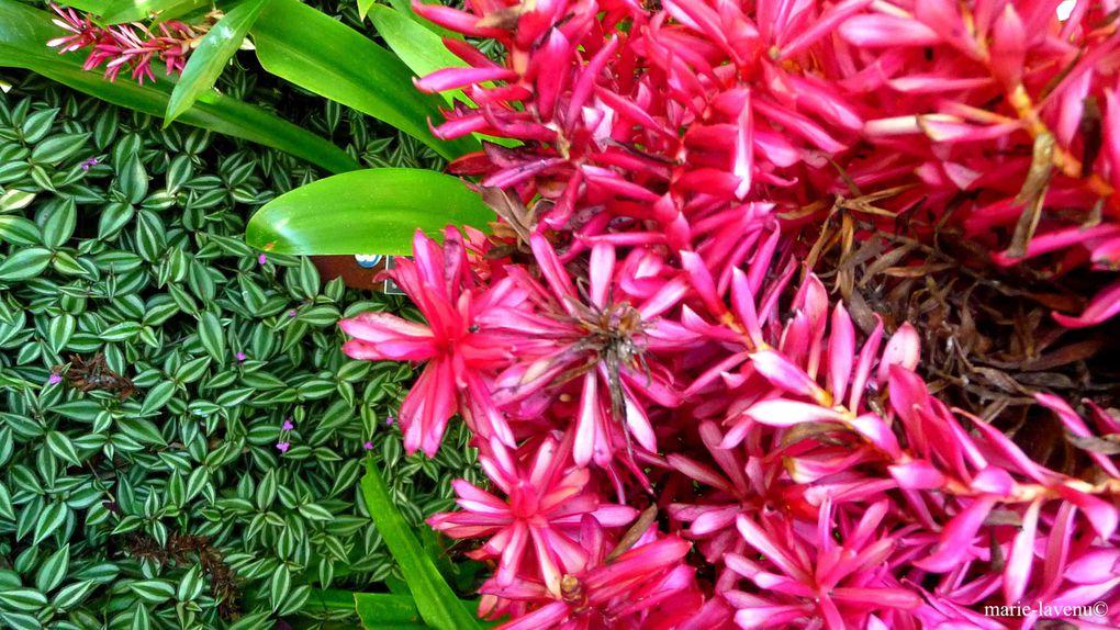 Album - Faune & Flore d'Australie