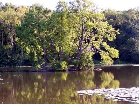 Album - Randonnée en forêt de Chantilly