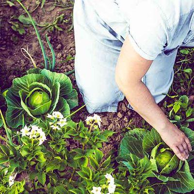 Astuces pour jardiner au naturel