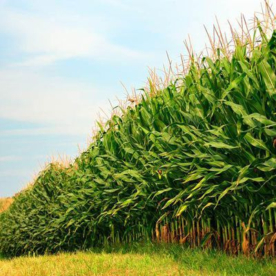 Agricultural Biologicals Market With Strategic Trends Growth, Demand & Future Prospects by 2024